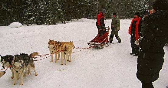 Talvepäevad koerterakendiga